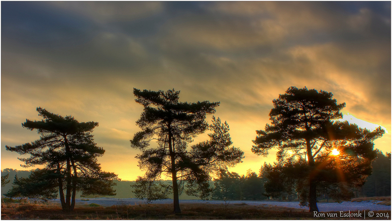 3 bomen - 3 bomen op een rij.. Foto gemaakt na zonsopkomst.