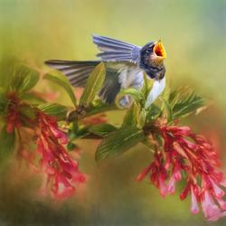 zwaluw bloem