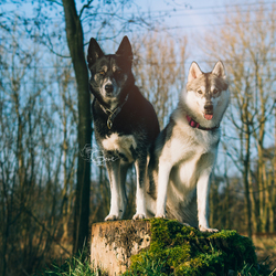 Mara en Pivka