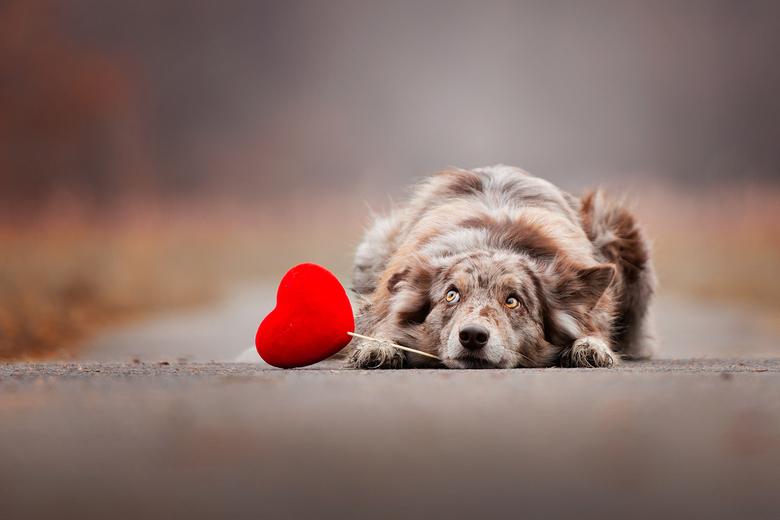 Wachten op mijn valentijn.... -