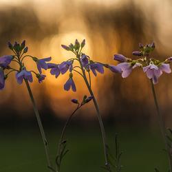 verlangen naar de lente