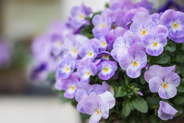 Lente - Voorjaar