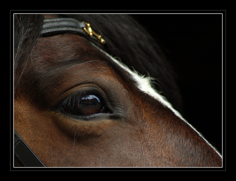 Horse - en ik ga ff door met mijn paardenselectie, hoewel sommige niet zo&#039;n paardenfan zijn. toch wil ik ze gewoon laten zien... <br /> <br />