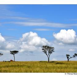 Serengeti Clouds
