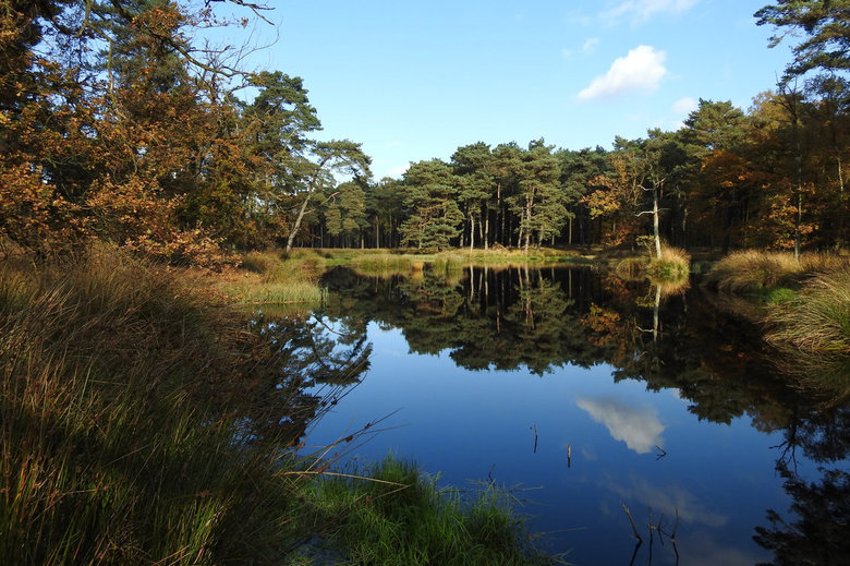 Bos meertje. - Mooi meertje midden in het bos in de regio Tegelen/Reuver/Nettetal.