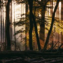 Speulderbos licht