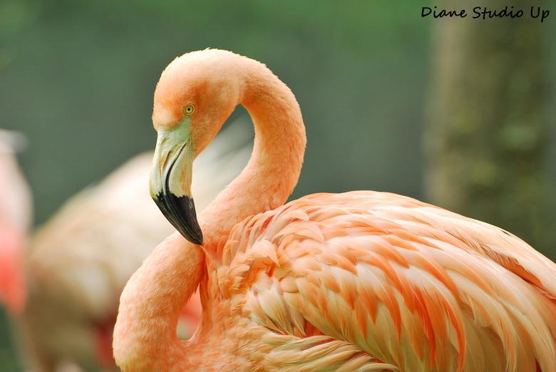 Flamingo - Wat een prachtdier toch...<br /> <br /> 16-06-2013