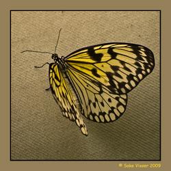 Papier vlinder