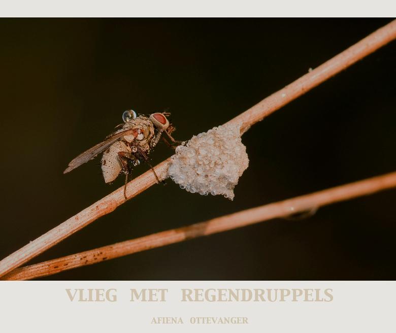 vlieg met regendruppels - Geen idee welk soort maar in het vroege ochtendlicht vond ik het die regendruppels wel leuk om vast te leggen!<br /> Bedank