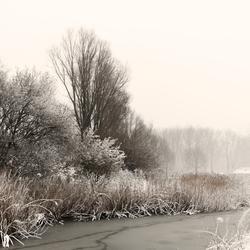 Brrrr. . .    winterse foto