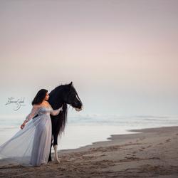 Beach horse