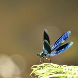 Kijk hoe mooi mijn vleugels zijn