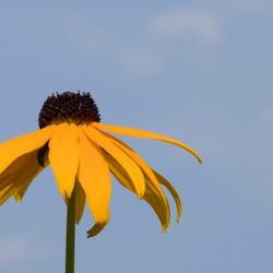 Gele zonnehoed
