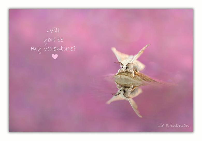 Valentijn - Valentijn,<br /> Will you be my valentine?