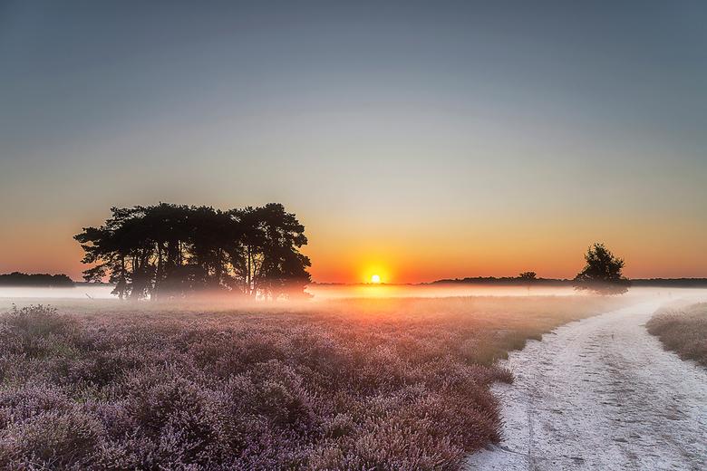 Regte Heide - De Regte heide met zonsopkomst.
