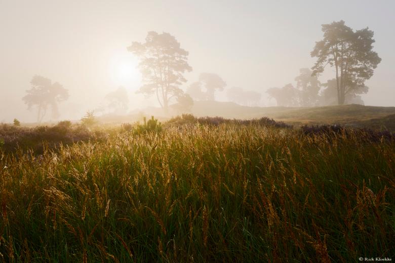 """Golden Morning - &quot;Golden Morning&quot;<br /> <br /> Een heerlijke ochtend op de heide!<br /> <br /> Volg me ook op mijn <a href=""""https://www."""