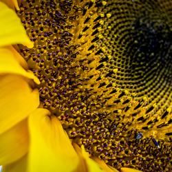 Zon en bloem