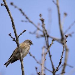 Vogel in park Veluwezoom