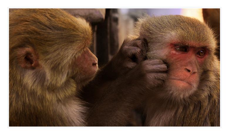Monkey Temple - Het betere vlooiwerk bij Swayambhunath (Monkey Temple, Kathmandu)