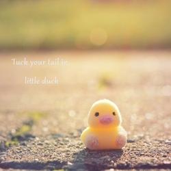 Just a little duck