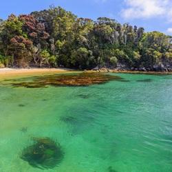 Ulva Island, NZ
