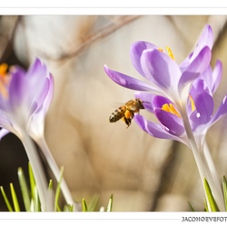 Het echte lentegevoel! (1)