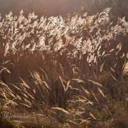 Zonlicht en gras in de duinen