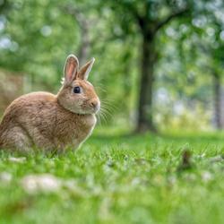 Adriaan ons konijn