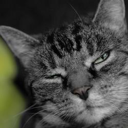 Cat-A-Pose