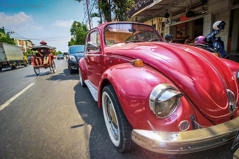 Pink Beetle - Mooie roze kever in de straten van Yogjakarta (Java)