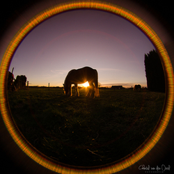Fisheye sunset