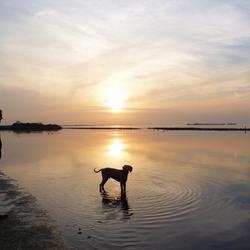 Grevelingenmeer tijdens zonsondergang vanavond.....