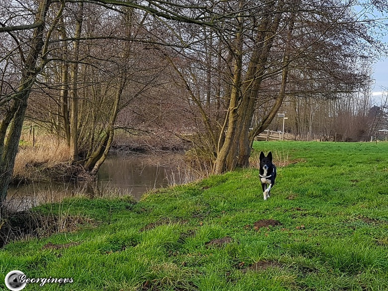 Bo in het Limburgse Heuvelland