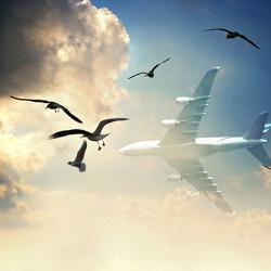 FLIGHT DESTINATION UNKNOWN