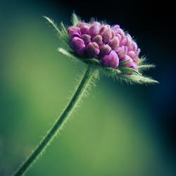 Another little purple flower.....