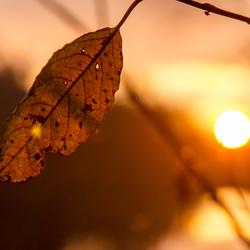 Belgium - Ardennes - Autumn Leaf at Sunset