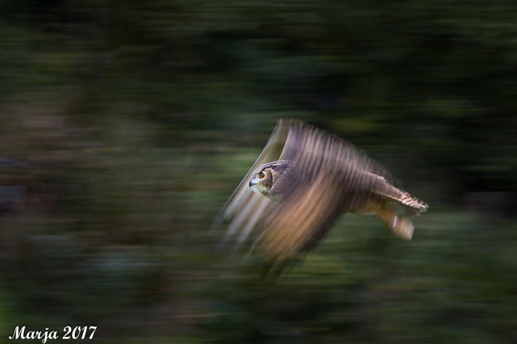 Oehoe op snelheid