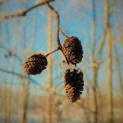 Zonnig winters plaatje