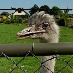 Vogel serie 114.Emoe