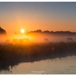zon, mist en paarden