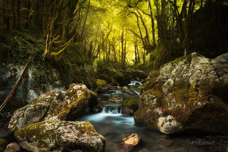 Forest Creatures. - Deze heb ik genomen in de Gourgue d'Asque, ook wel La Petite Amazonie genoemd, in het zuiden van Frankrijk.