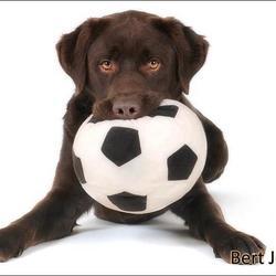 De bal is van mij!