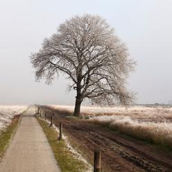 Freezing lonely