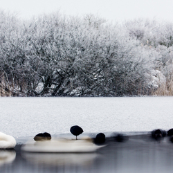 dreaming  in the snow-6580.jpg