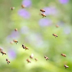 Zonder bijtjes geen leven!