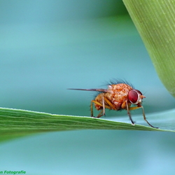 A beautiful fly