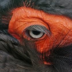Rode oogschaduw en lange wimpers