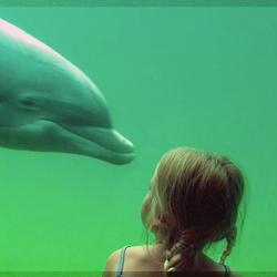 Meisje en dolfijn