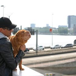 Bij de erasmusbrug in Rotterdam