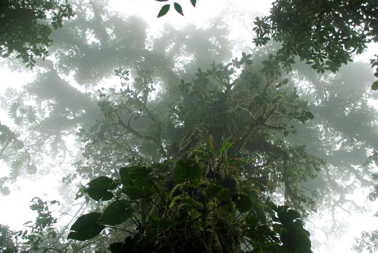 Boomkruin in Monte Verde - Foto's van natuur, landschappen, etc.